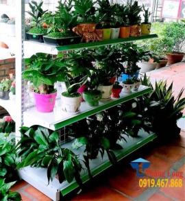 Cung cấp kệ trưng bày cây cảnh chậu hoa giá rẻ uy tín chất lượng